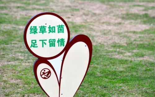 爱护小树的标语