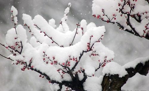 有关冬季养生祝福短信大全