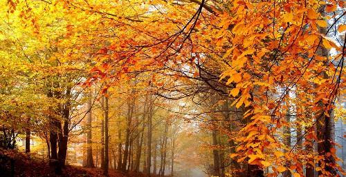 有关写秋天的祝福语
