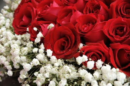 写玫瑰花的句子
