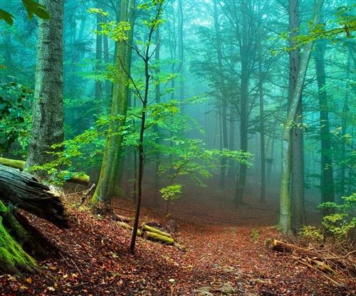 写一句关于保护森林的宣传标语