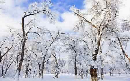 形容大雪纷飞的句子