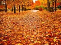 描写秋天叶子的句子 描写春天叶子的诗句