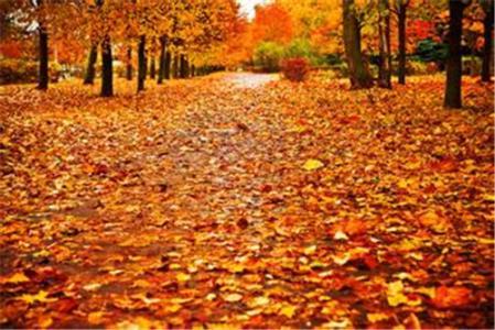 描写秋天叶子的句子