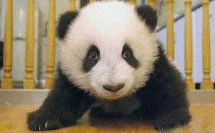 关于熊猫说说
