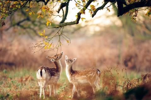 形容鹿的句子