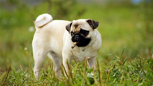 发狗狗的幽默说说 朋友圈发狗配什么文字