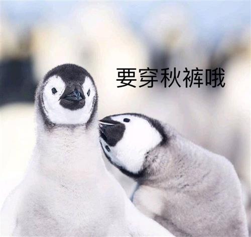 微信朋友圈今天好冷的说说