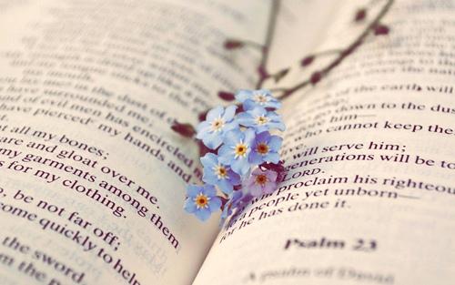 一句激励自己读书的名言 坚持读书的唯美句子