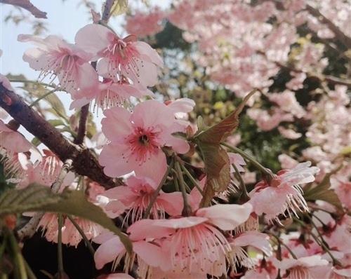 期待春暖花开的唯美句子 春暖花开的唯美句子朋友圈