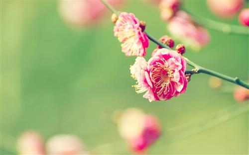 一年级关于春天的好词好句