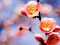 祝福武汉祝福中国的祝福语 疫情时期暖心祝福语