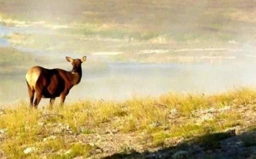 爱护大自然保护野生动物宣传标语