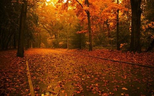 描写喜欢秋天的说说心情短语