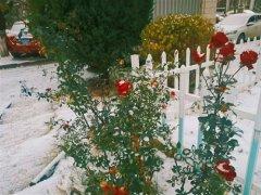 二十四节气小雪祝福语