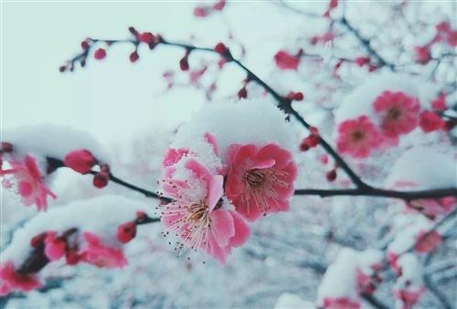 最经典的大寒节气祝福语大全