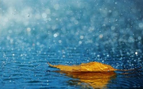 下雨了最贴心的问候语