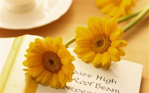 花的寄语唯美句子 赞美花的优美短句